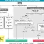 Comparatif Somasnelle Gel - Traitement varices levis   Promotion en cours