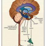 Découvrir Flexa Plus Optima - Arthrose hanche chirurgie | Avis des utilisateurs