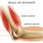 Découvrir Flexa Plus Optima - Renforcer les articulations du genou | Avis des testeurs