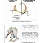 Comparateur Douleur articulaire genou et fatigue | Flexa Plus Optima - Qualité Prix