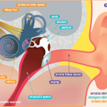Découvrez traitement: Appareil auditif prix belgique | Avis des experts