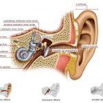 Découvrez traitement: Perte audition apres otite   Où l'acheter ?